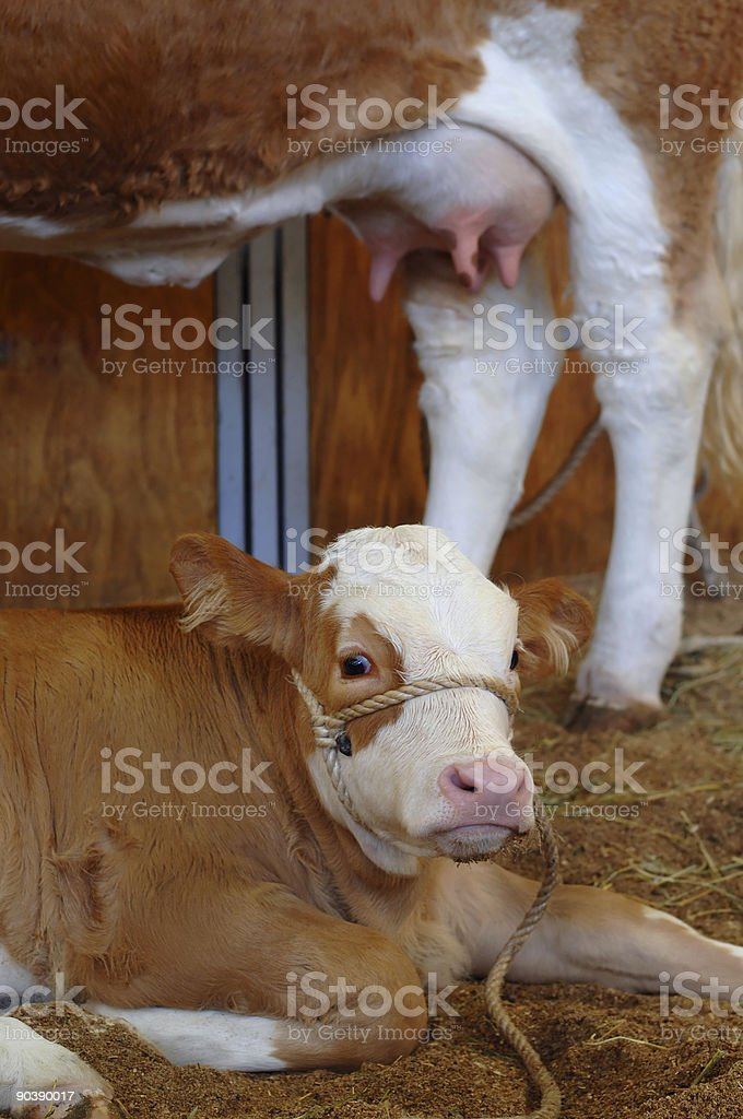 Mother's Milk royalty-free stock photo