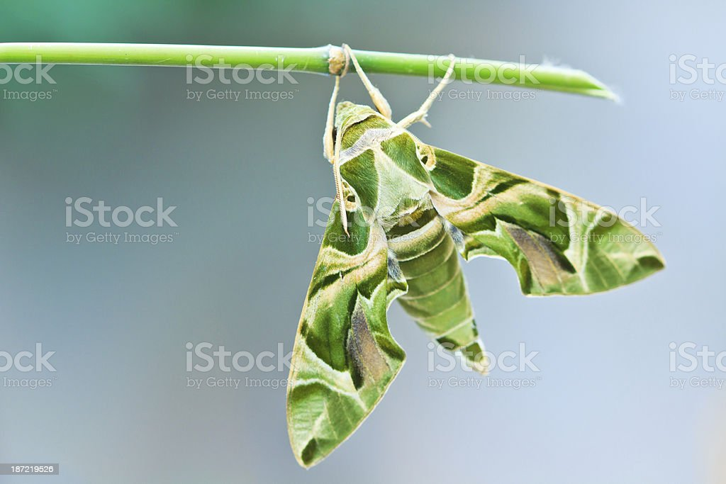 Moth-Guard Month wraps stock photo