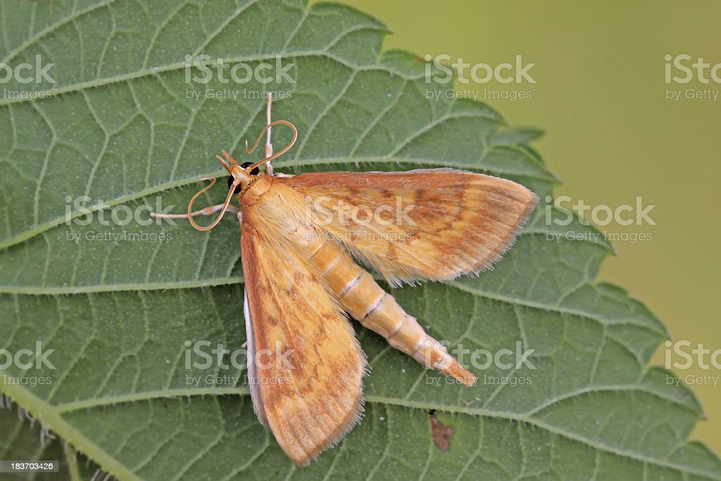 moths insects royalty-free stock photo