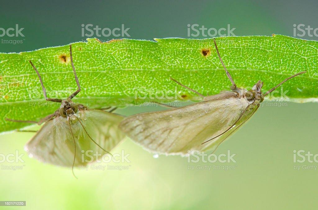 Moths resting stock photo