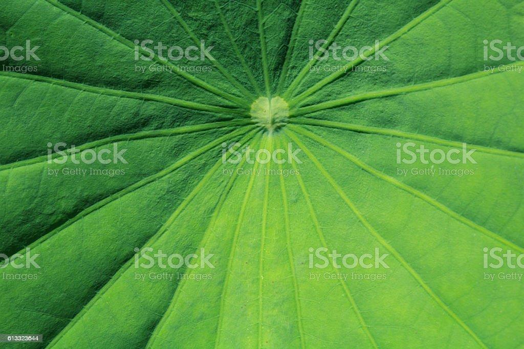 Motifs of lotus leaf stock photo