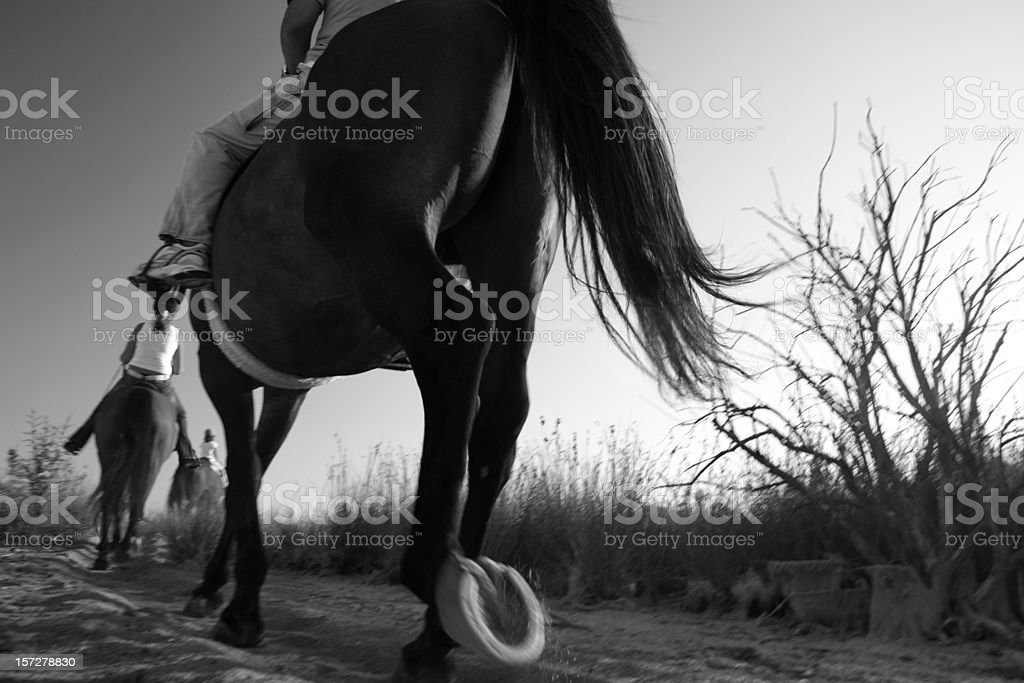 Motion blur horse ride royalty-free stock photo