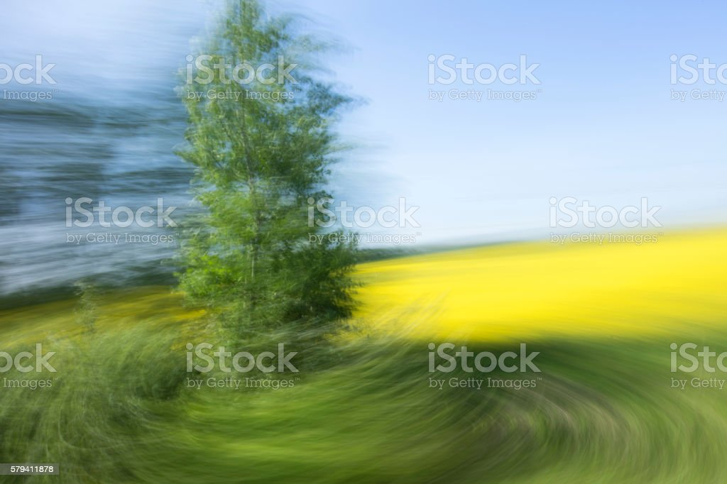 Motion blurred tree with yellow field and blue sky stock photo