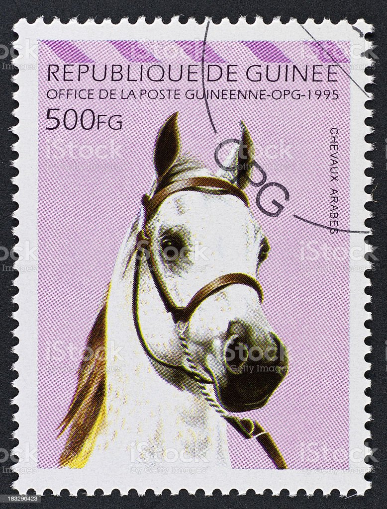 motive stamp Guinea - head of arabian horse stock photo