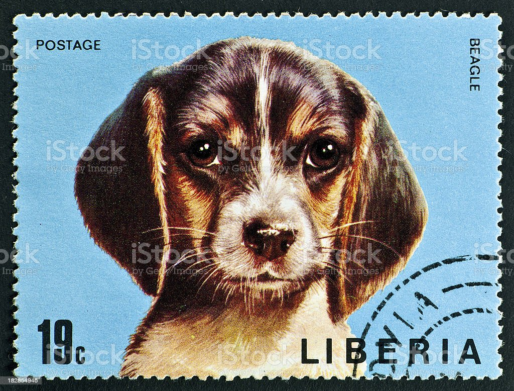 motive stamp with dog -  Beagle stock photo