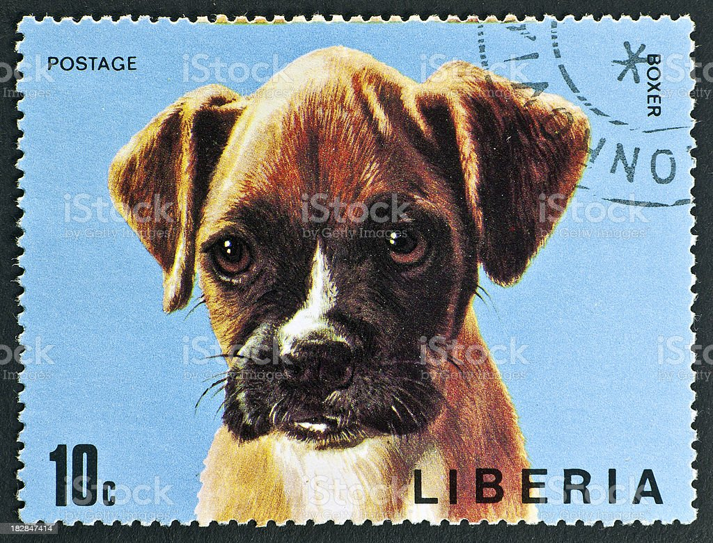 motive stamp with dog - Boxer stock photo