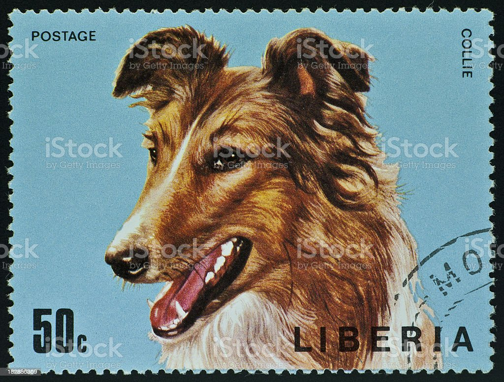 motive stamp with dog - Collie stock photo
