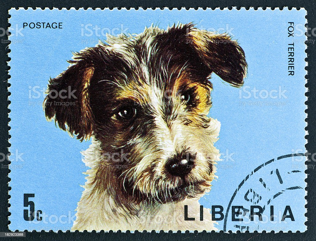 motive stamp with dog - Fox Terrier stock photo