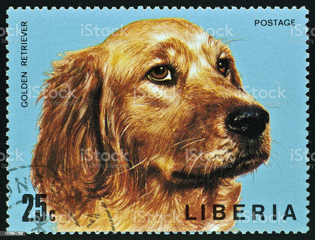 motive stamp with dog - Golden Retriever stock photo