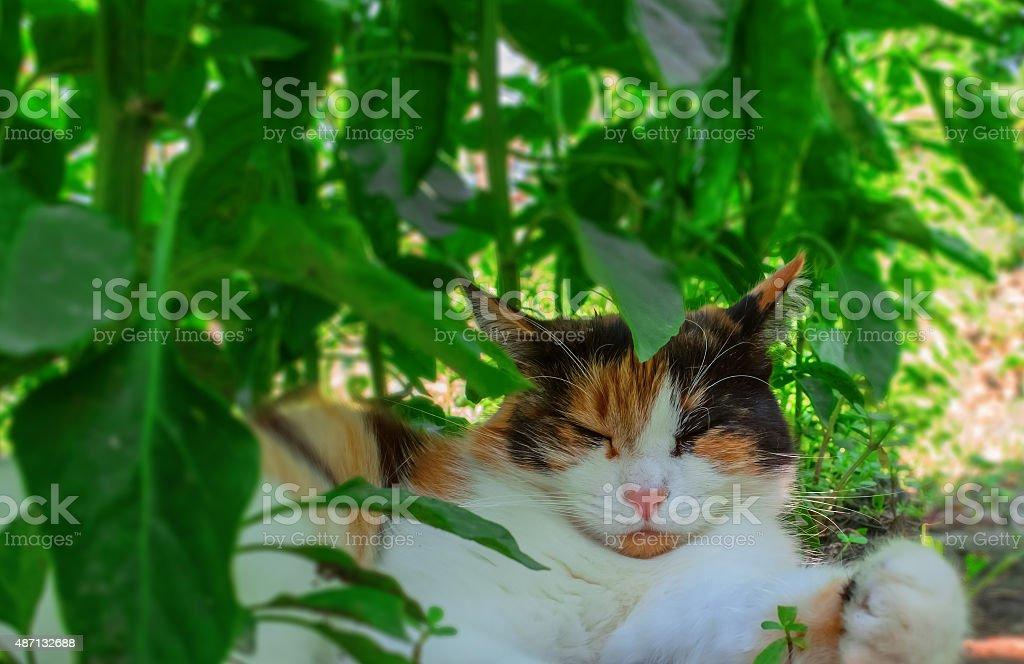 motley cat royalty-free stock photo