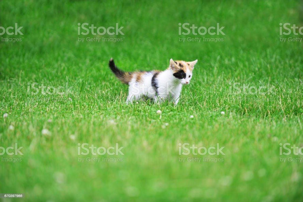 Motley cat stock photo