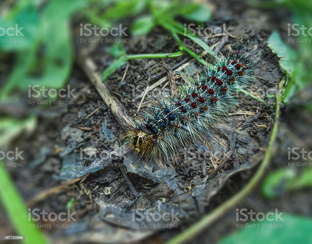 motley caterpillar royalty-free stock photo