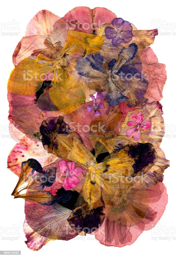motley multicolored applique clearing of dried pressed flowers  gladiolus stock photo