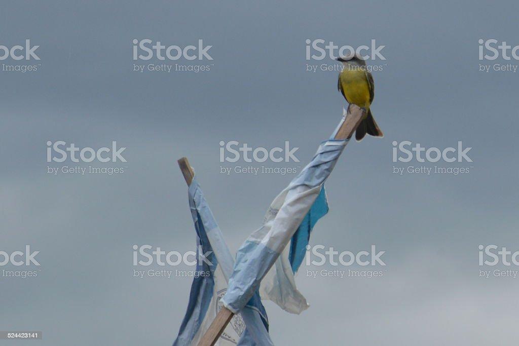 Motmot bird stock photo