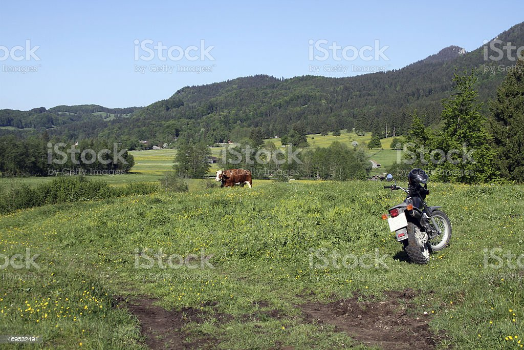 motorbike and cow in a meadow stock photo