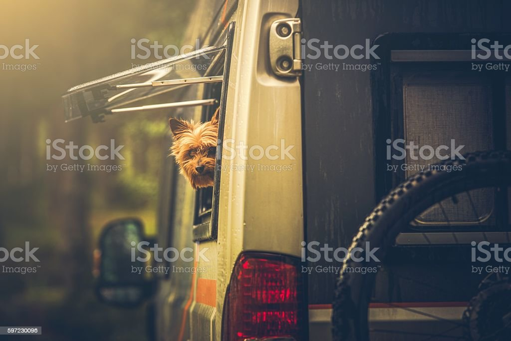 Motorhome Traveling with Pet stock photo