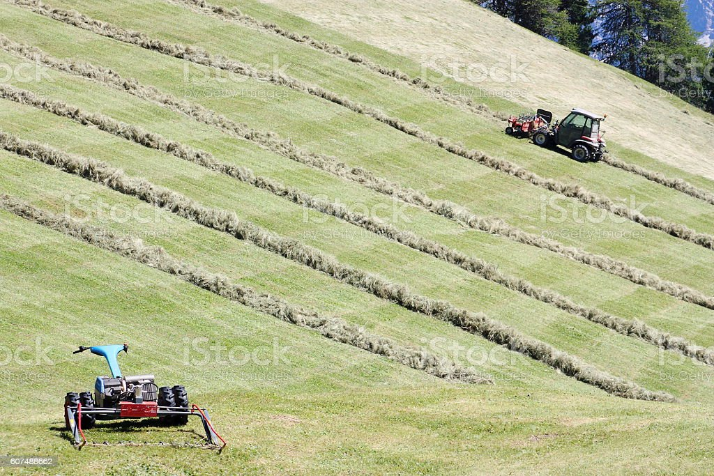 Motorised mower, swather and rows of cut hay (windrow) stock photo