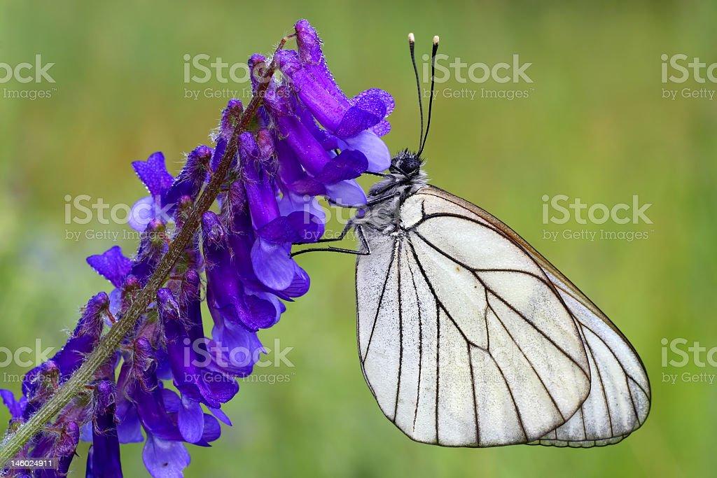 Motyl stock photo