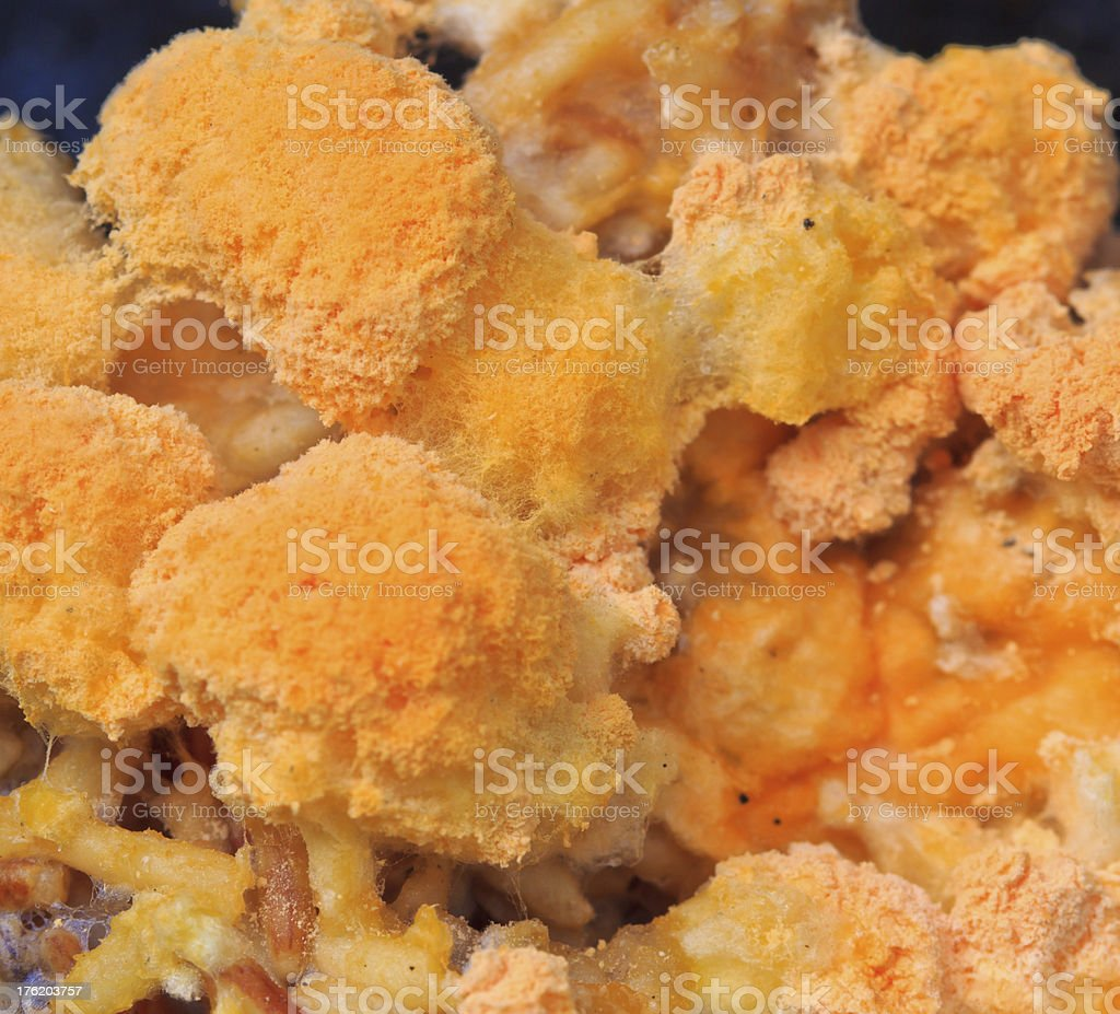 mould colonies growing on the old rice surface royalty-free stock photo