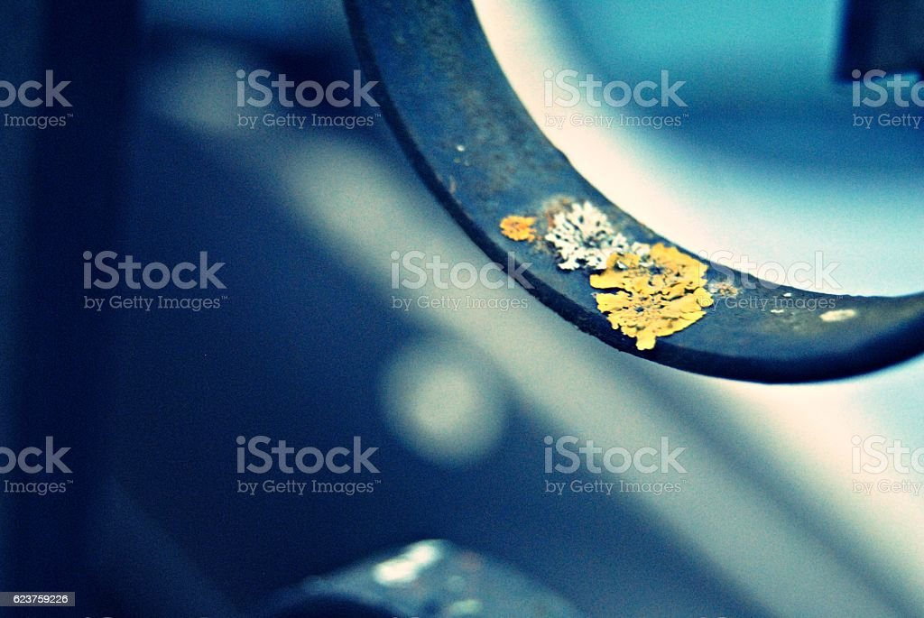 Mould flower royalty-free stock photo