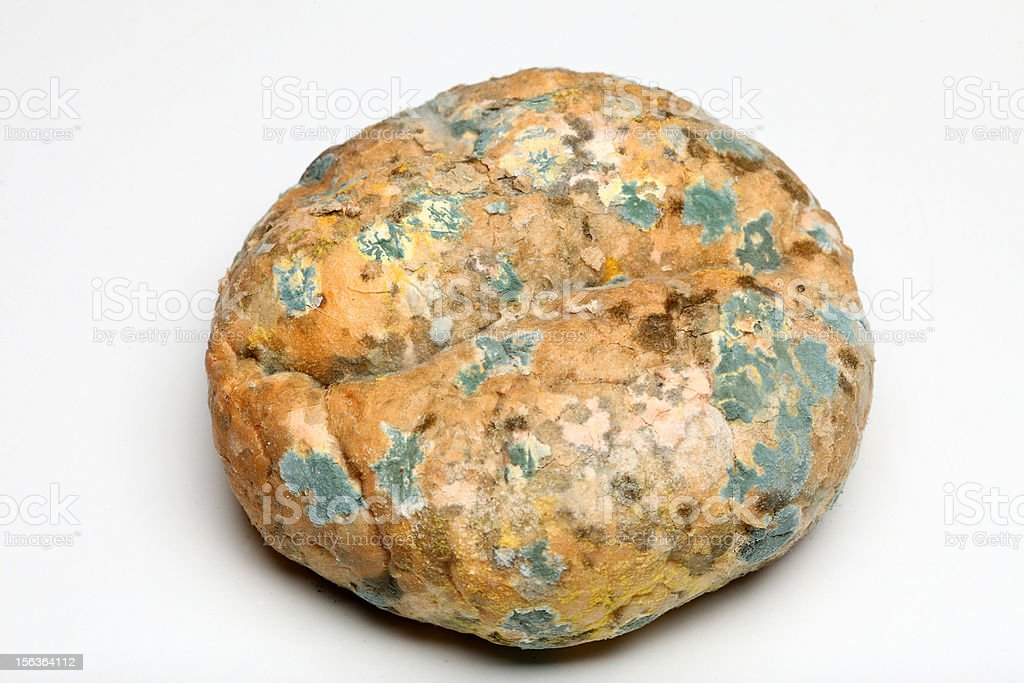 Mould growing on old bread royalty-free stock photo