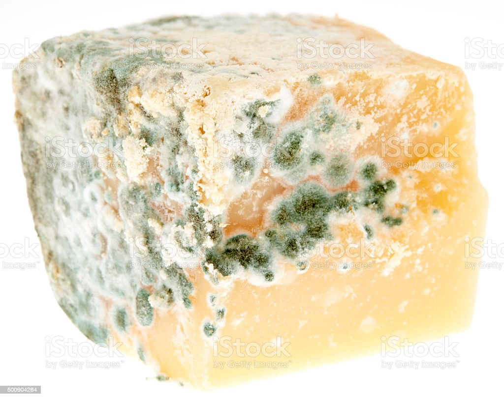 Mould on Cheese stock photo
