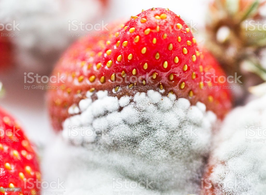 Mould on strawberries stock photo