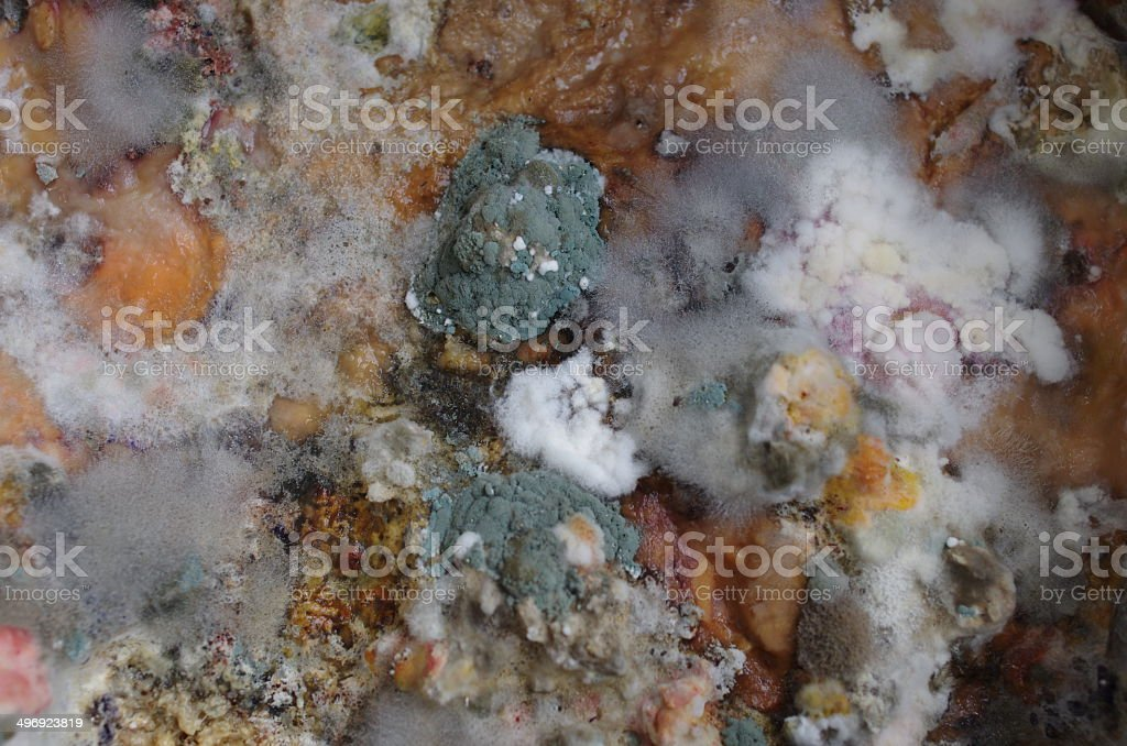mouldy bread royalty-free stock photo