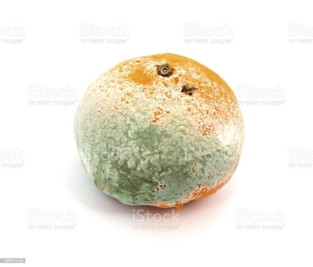 Mouldy Fruit royalty-free stock photo