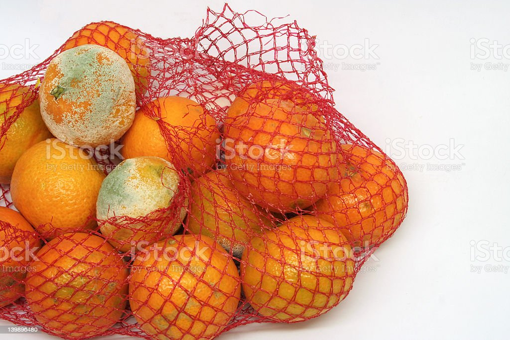 Mouldy oranges in a bag royalty-free stock photo