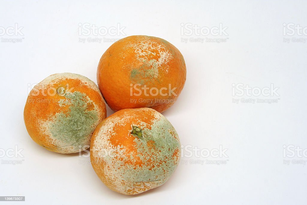 Mouldy oranges royalty-free stock photo