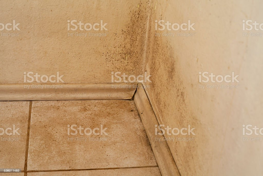 Mouldy Wall stock photo