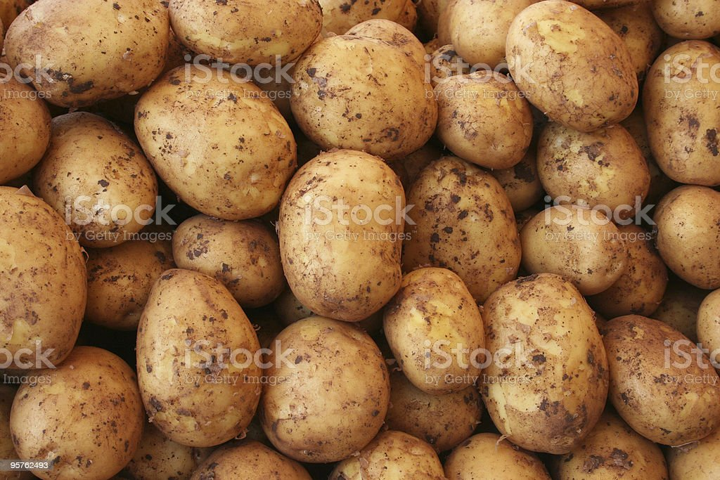 Mound of potatoes of various shapes and sizes royalty-free stock photo