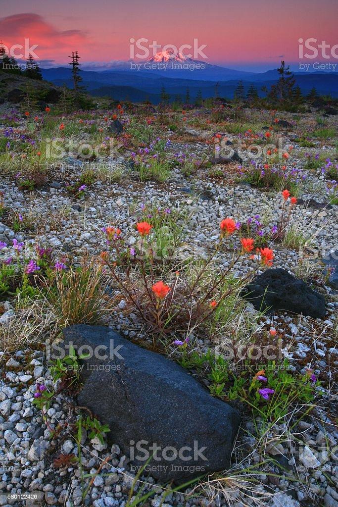 Mount Adams From Saint Helens stock photo