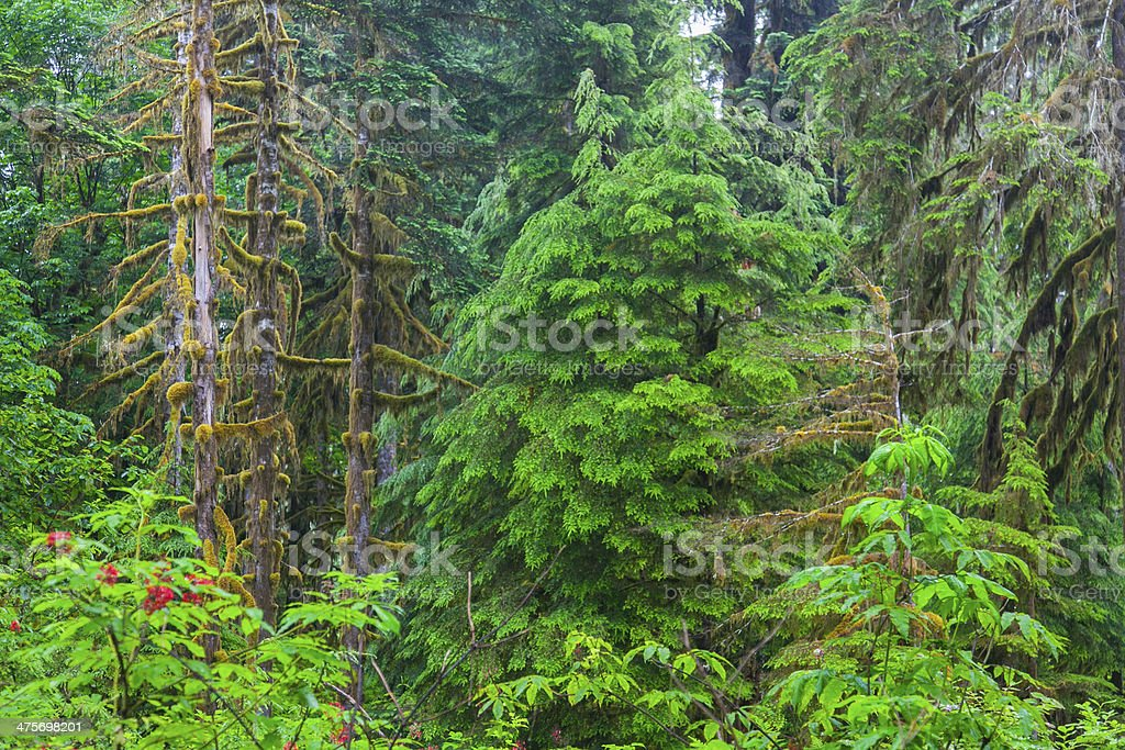 Mount Baker-Snoqualmie National Forest - July 2011 stock photo