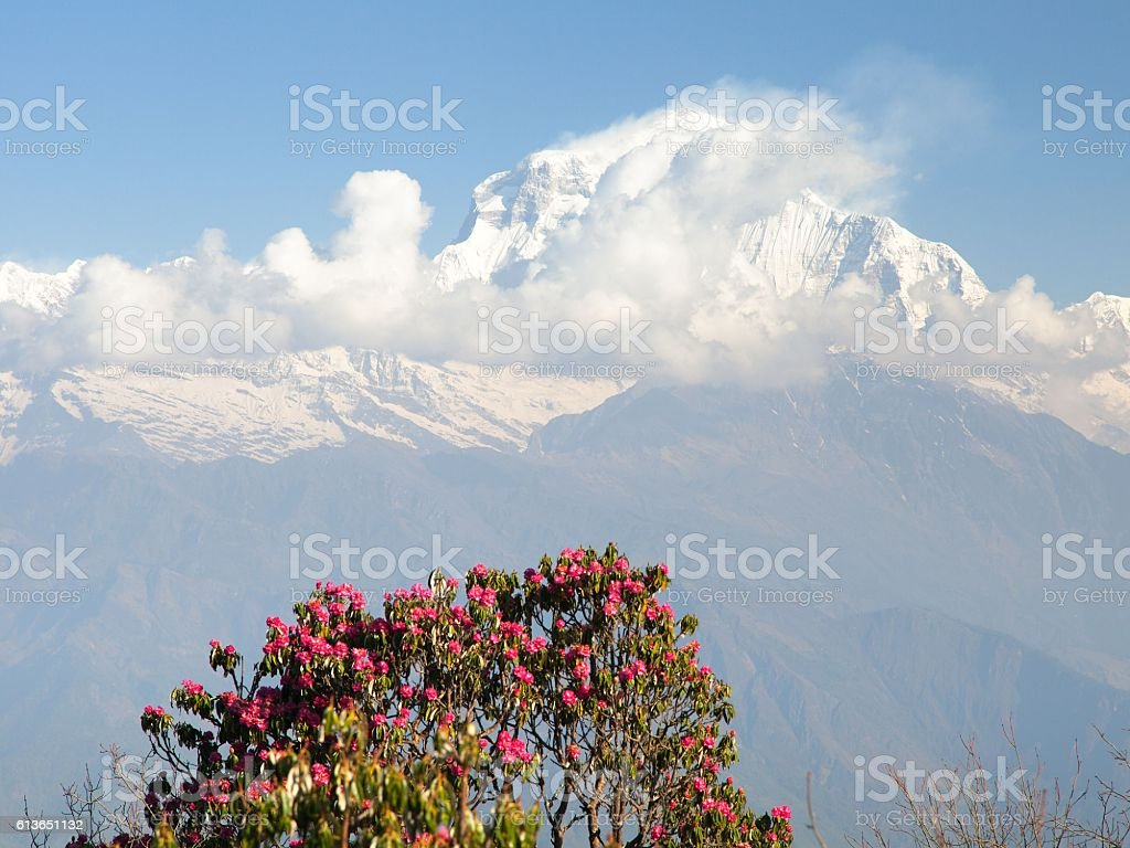 Mount Dhaulagiri from Poon Hill view point stock photo