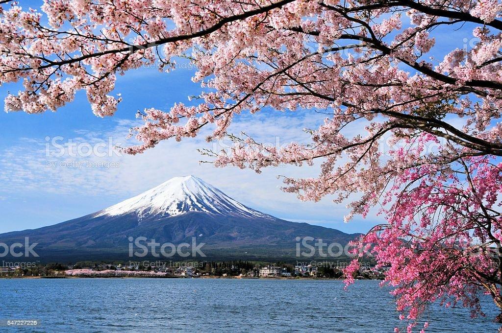Mount Fuji and Cherry tree stock photo