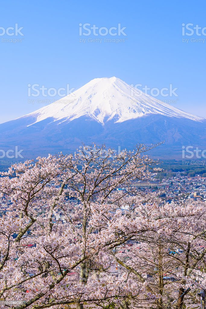 Mount Fuji and Sakura in Springtime stock photo