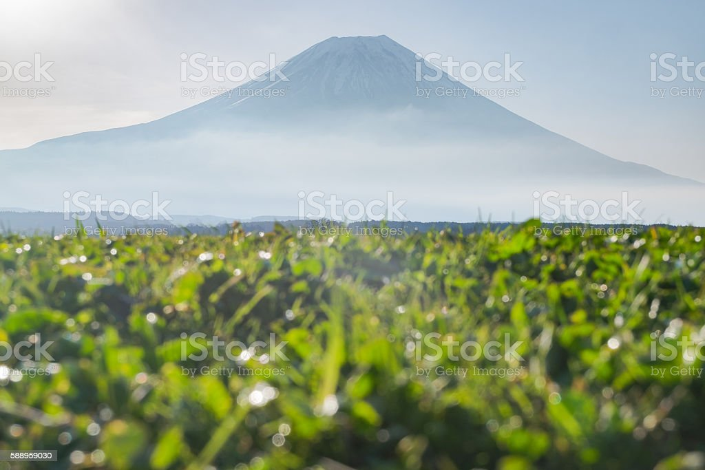 Mount Fuji From low angle view in Fumoto stock photo