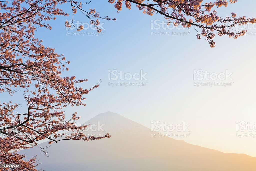 Mount Fuji Through Pink Cherry Blossom in the Morning stock photo