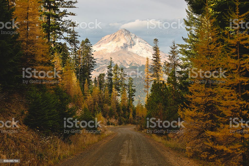 Mount Hood Framed with Nature stock photo