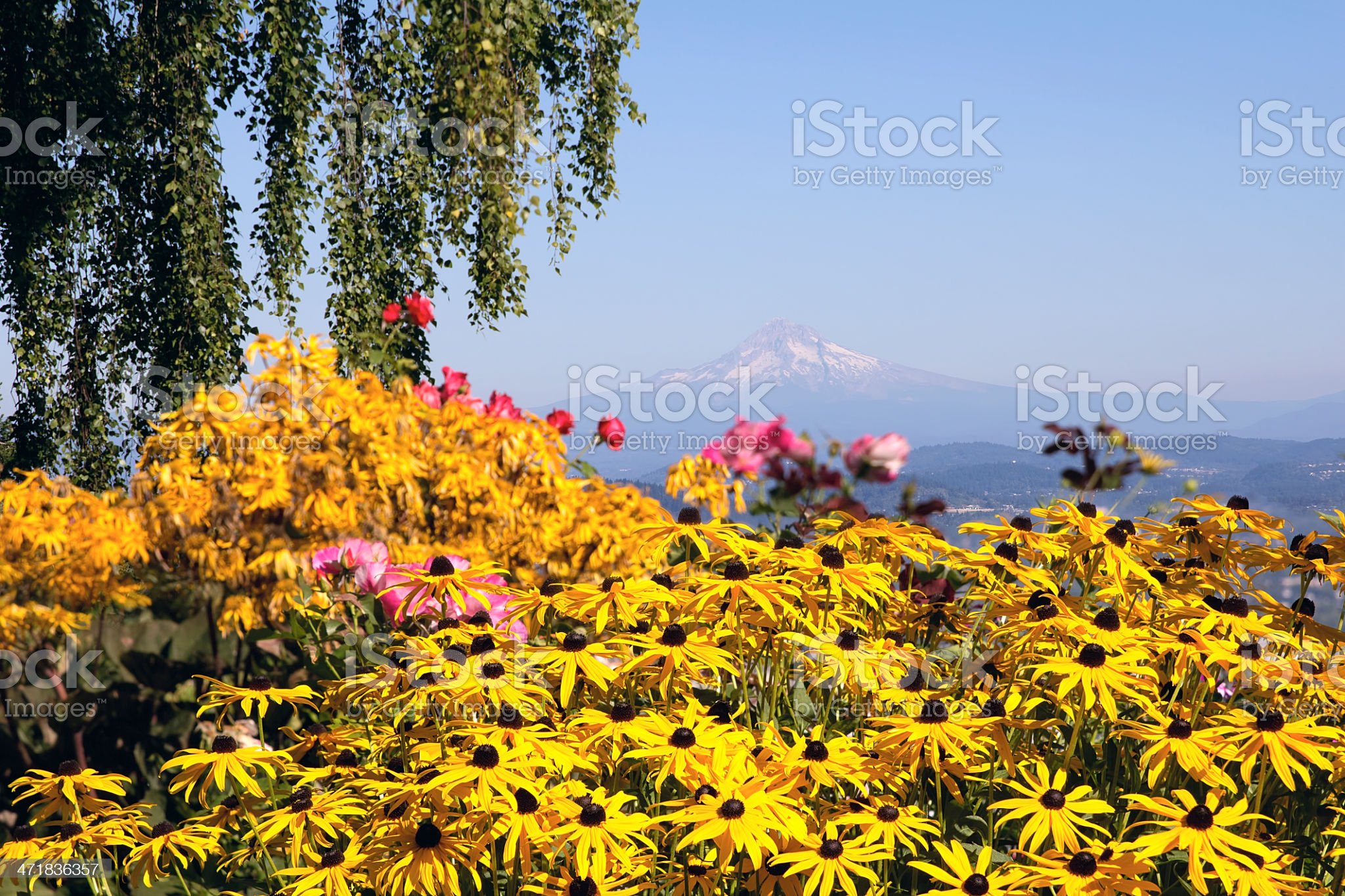 Mount Hood View with Flowers royalty-free stock photo