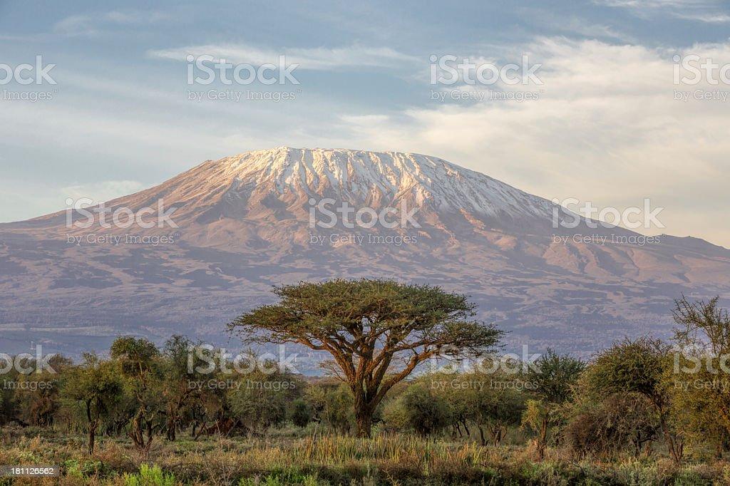 Mount Kilimanjaro and Acacia in the morning stock photo
