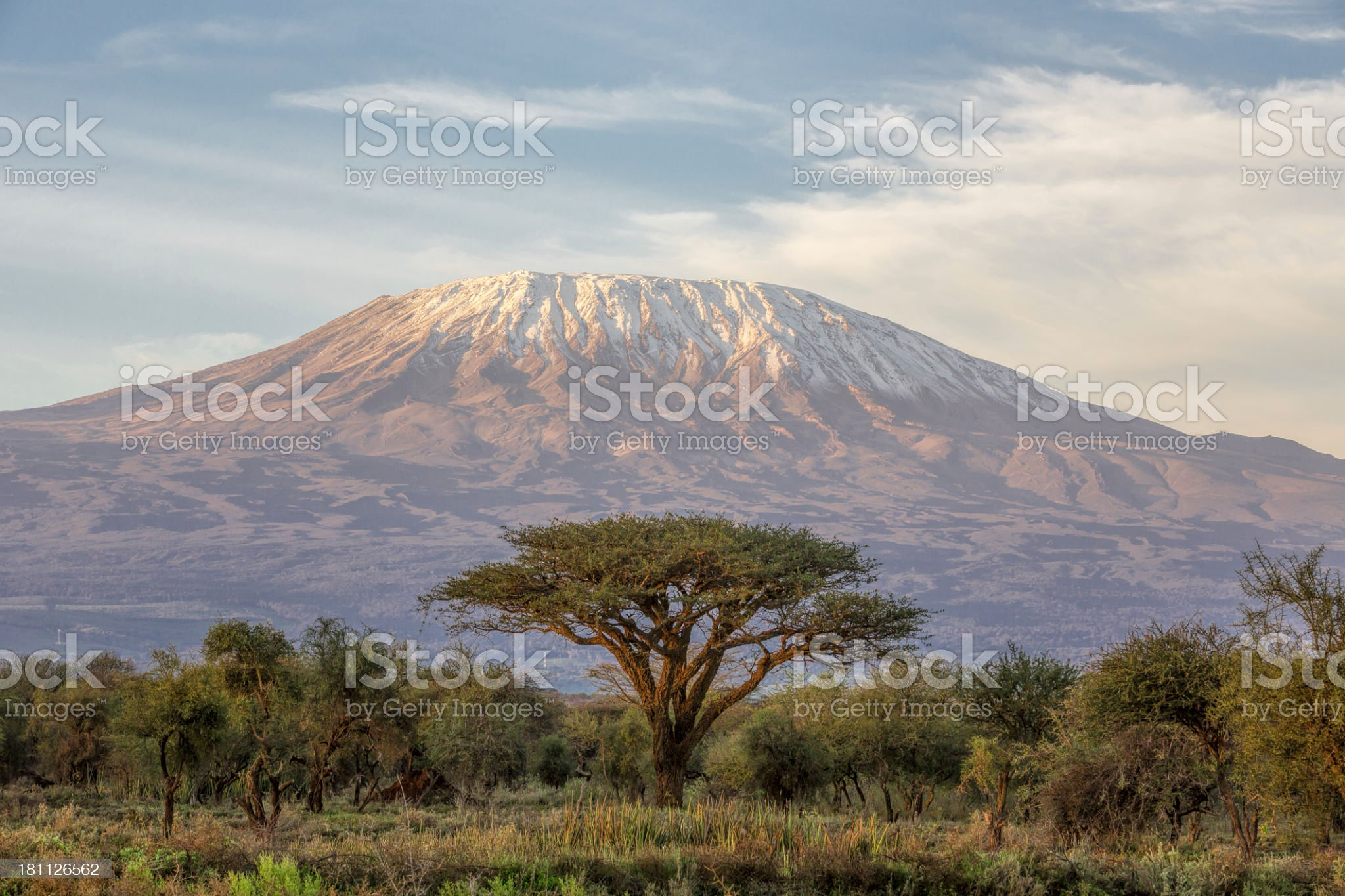 Mount Kilimanjaro and Acacia in the morning royalty-free stock photo