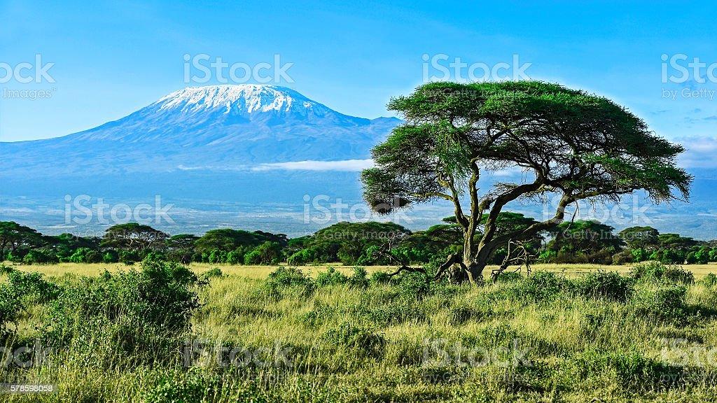 Mount Kilimanjaro in Kenya stock photo