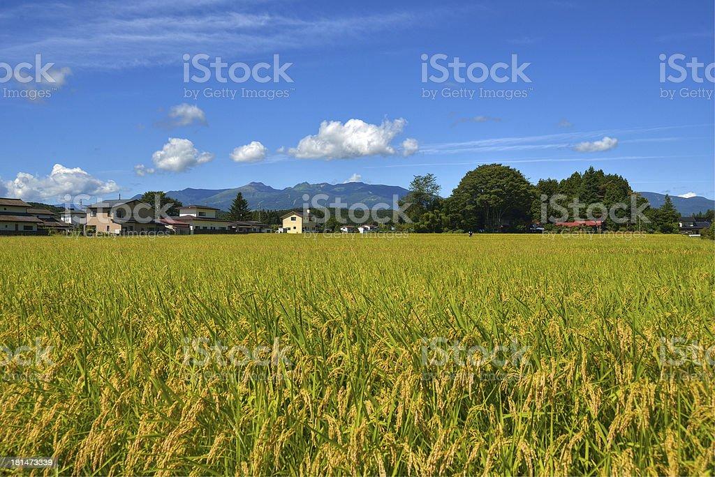 Mount Nasu and rice field stock photo