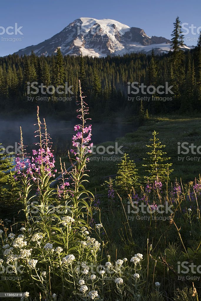 Mount Rainier and Summer Wildflowers royalty-free stock photo