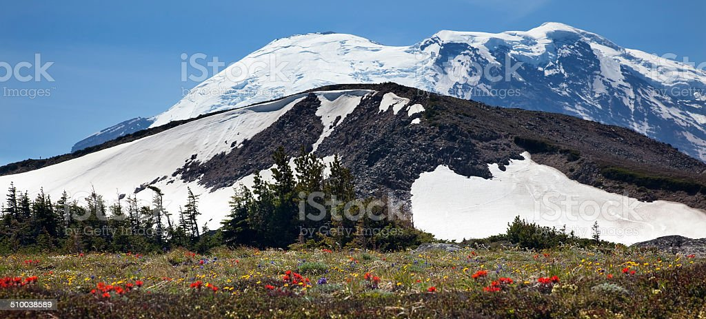 Mount Rainier Sunrise Wildflowers Snow stock photo
