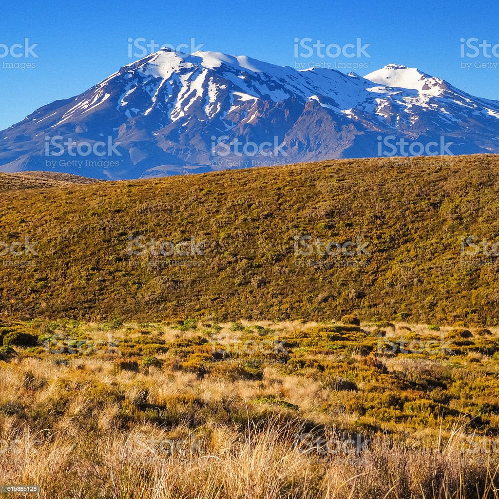 Mount Ruapehu Peeking Above Tussock Grasslands at Tongariro Alpine Crossing stock photo