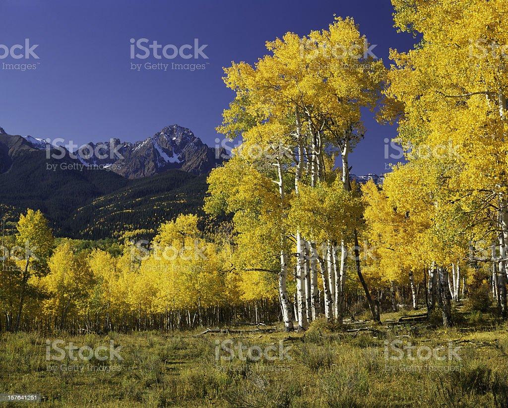 Mount Sneffels With Autumn Aspen Trees stock photo